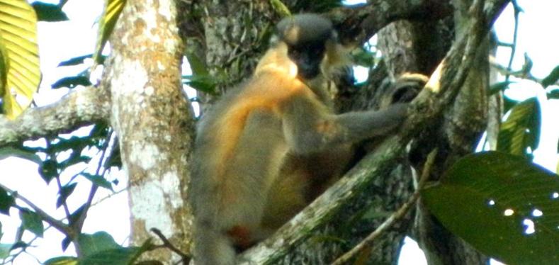 Dehing-Patkai-Wildlife-Sanc