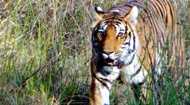 Bor Wildlife Sancturary