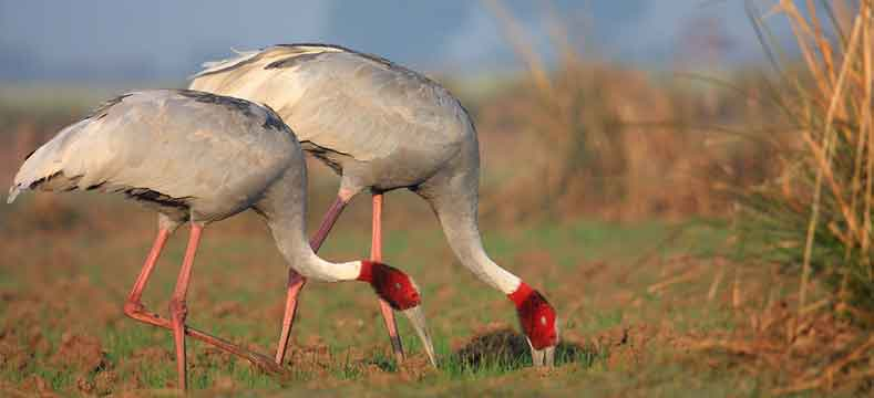 bharatpur-national-park