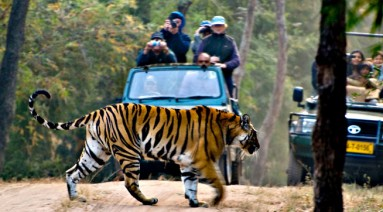 india-wildlife-tour