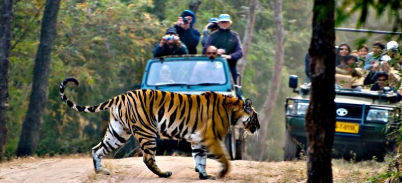 india-wildlife-tour