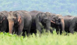 world-elephant-day