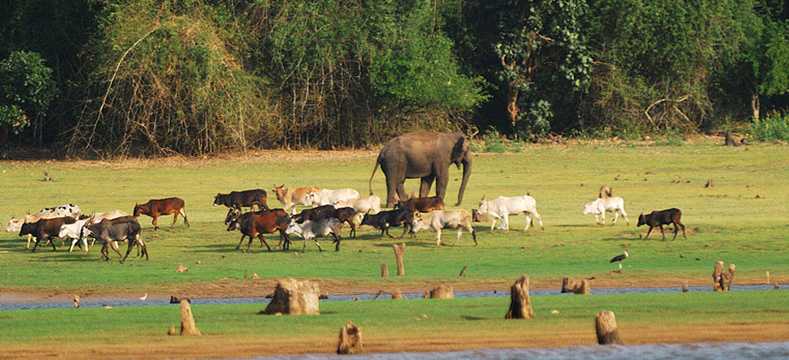 nagarhole-national-park
