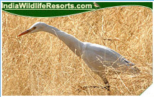 Bird Watching Tours