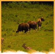 Periyar Wildlife Santuary