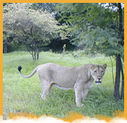 Gir National Park Weekend Tour Package